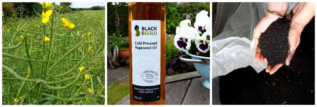 blackandgold rapeseed oil image